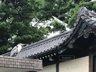 屋根と鳥の写真・画像素材[2351721]