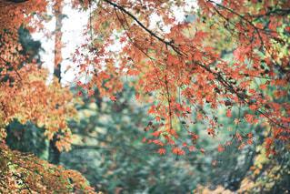木の近くでの写真・画像素材[2743221]