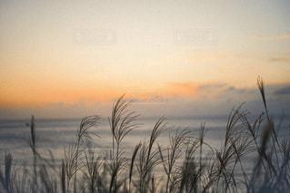 曇りの日のヤシの木の群れの写真・画像素材[2743226]