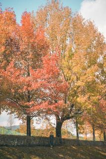 森の中の木の写真・画像素材[2743231]
