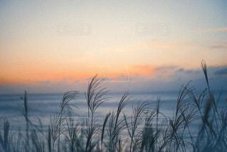 空の雲の群の写真・画像素材[2901950]