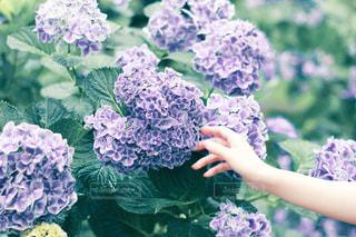 花のクローズアップの写真・画像素材[3235244]