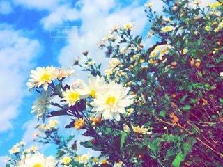 白い花の写真・画像素材[2345463]