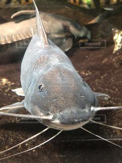 魚のクローズアップの写真・画像素材[2341349]
