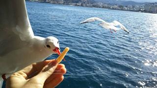 水域の上を飛ぶ鳥の写真・画像素材[2342391]