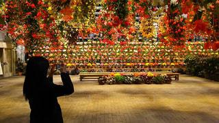 花の写真・画像素材[2342393]