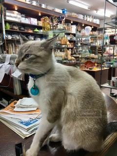 テーブルの上に座っている看板猫の写真・画像素材[2344872]