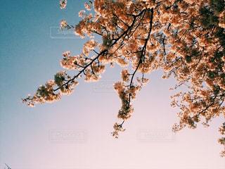 木のクローズアップの写真・画像素材[2344921]