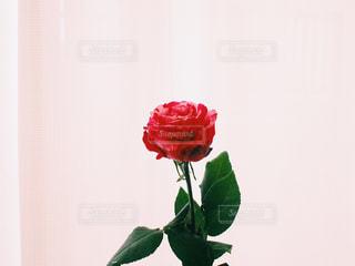 ピンクの花でいっぱいの花瓶の写真・画像素材[2344965]
