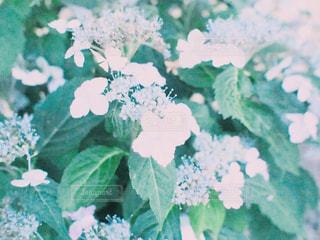 花のクローズアップの写真・画像素材[2345166]