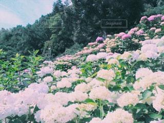 庭のクローズアップの写真・画像素材[2345170]