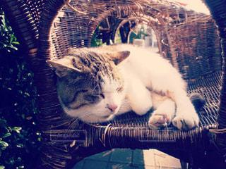 椅子に座っている猫の写真・画像素材[2373771]