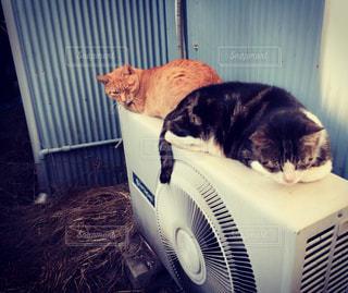 電室外機の上に座っている猫の写真・画像素材[2373772]