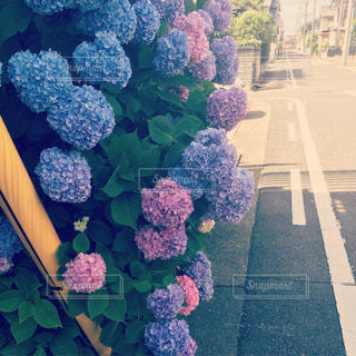 花園のクローズアップの写真・画像素材[2373778]