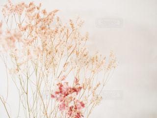 花をクローズアップするの写真・画像素材[2886807]