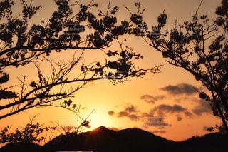 南房総に咲いていた桜の写真・画像素材[2351144]