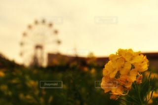 ソレイユの丘の写真・画像素材[2355145]