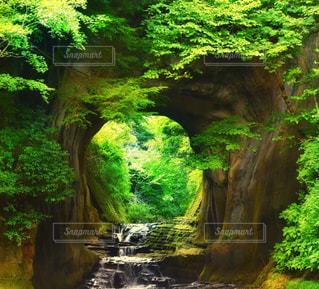 森の中の大きな滝の写真・画像素材[2444577]