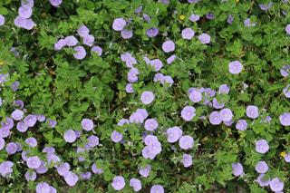 花のクローズアップの写真・画像素材[2349095]
