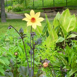 黄色の花の写真・画像素材[2349941]