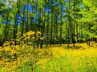 森の中の写真・画像素材[2352076]