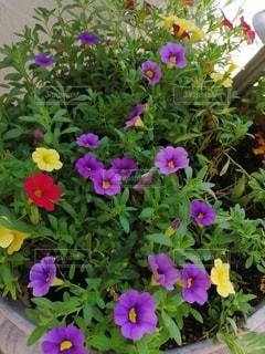 紫色の花でいっぱいの花瓶の写真・画像素材[2349060]