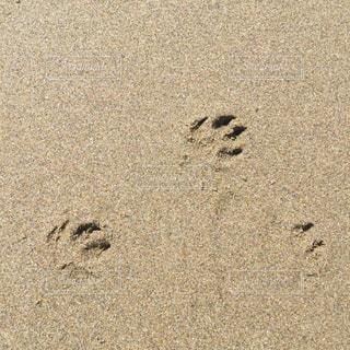 砂浜 犬の足跡の写真・画像素材[2346902]