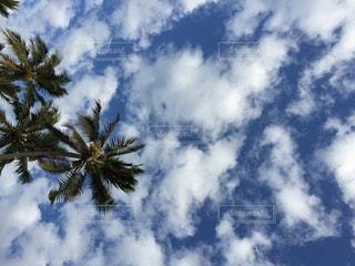 自然の写真・画像素材[91050]