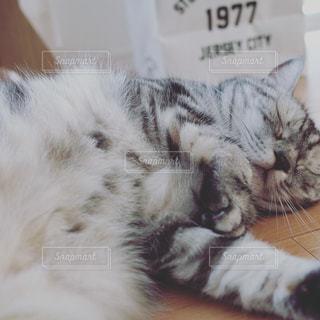 ベッドに横たわる猫の写真・画像素材[2348613]