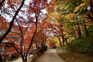 木の隣の空の公園のベンチの写真・画像素材[2348847]