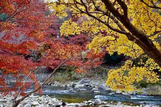 水に囲まれた木のクローズアップの写真・画像素材[2348850]