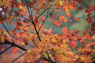 木のクローズアップの写真・画像素材[2348852]