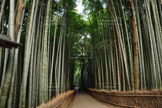 竹林の写真・画像素材[2349210]