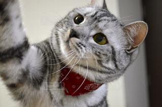 猫のクローズアップの写真・画像素材[2354666]
