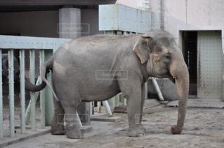 建物の前に立っている大きな象の写真・画像素材[2354707]