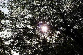 木のクローズアップの写真・画像素材[2354712]