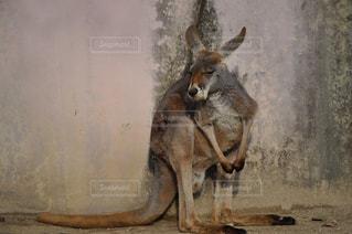 土の中に立っている大きな茶色の馬の写真・画像素材[2354727]