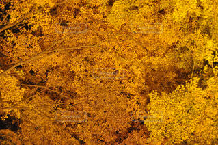木のクローズアップの写真・画像素材[2355482]