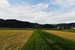 緑豊かな野原の列車の写真・画像素材[2490958]