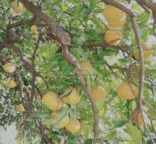 果物の写真・画像素材[3104780]