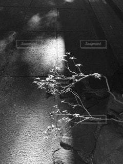 モノクロームの写真・画像素材[90967]