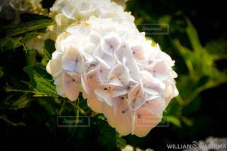 花のクローズアップの写真・画像素材[2359581]