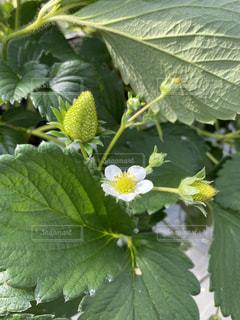 緑の植物のクローズアップの写真・画像素材[2937351]