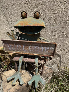 カエルの写真・画像素材[3115602]