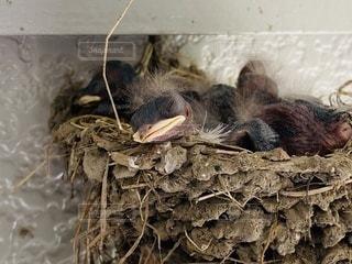 巣の上に座っている鳥の写真・画像素材[3363795]
