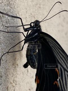 蝶の写真・画像素材[3363876]