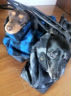 犬の写真・画像素材[96631]
