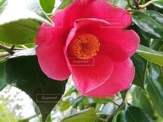 花のクローズアップの写真・画像素材[2410403]