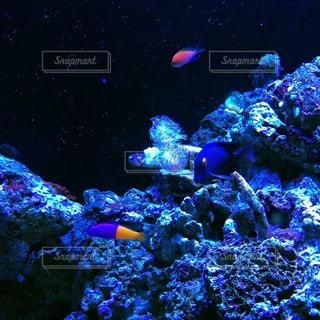熱帯魚の写真・画像素材[113763]