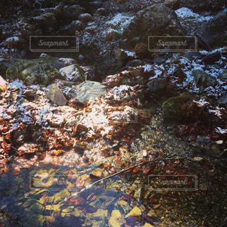 冬の渓流の写真・画像素材[809844]